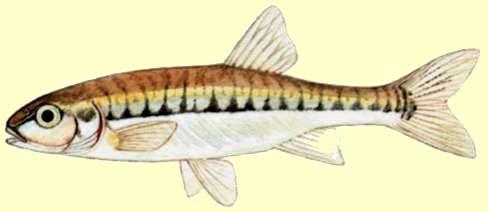Peche82 toute la p che dans le tarn et garonne for Acheter poisson